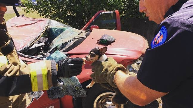 Update on puppy saved after I-110 crash in Pensacola | WPMI