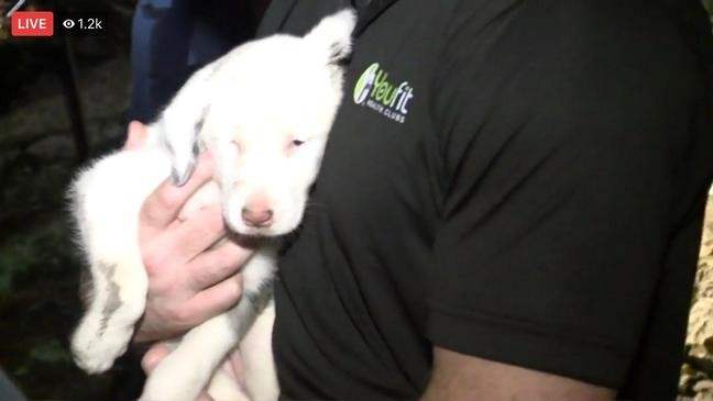 RESCUED: Deaf puppy trapped in hole in North Alabama | WPMI
